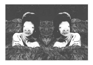 Miss-Pig