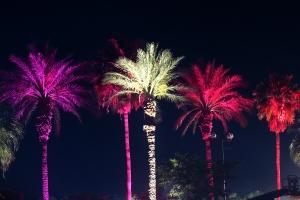 Coachella 5